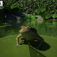 Cane Toad 3D Model