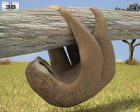 Three-Toed Sloth 3D Model