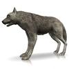 18 35 32 43 000 timberwolf1440 4
