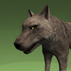 18 35 32 928 004 timberwolf1440 4