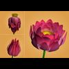 18 36 58 73 lotus 4