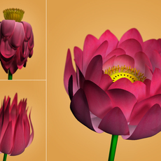 Lotus Flower 3D Model