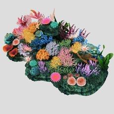 Beautiful coral_001 3D Model