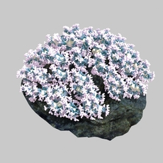 Beautiful coral_002 3D Model