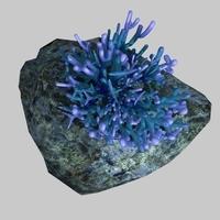 Coral_004 3D Model