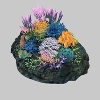coral_007 3D Model