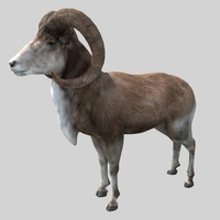 goat01 3D Model