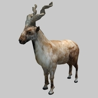 goat 02 3D Model