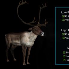 Deer Caribou 3D Model
