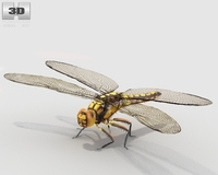 Dragonfly High Detailed Rigged 3D Model