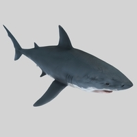 Great Shark 3D Model