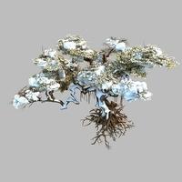 Snow tree002 3D Model
