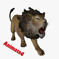 Male Lion Animated 3D Model