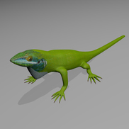 Anole 1 small