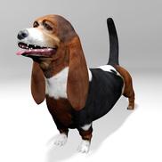Basset hound r1 small