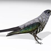 Cuckoor1 small