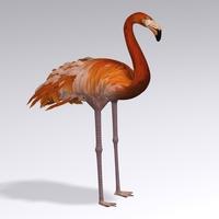 Flamingo1.1 cover