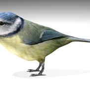 Nightingale3 small