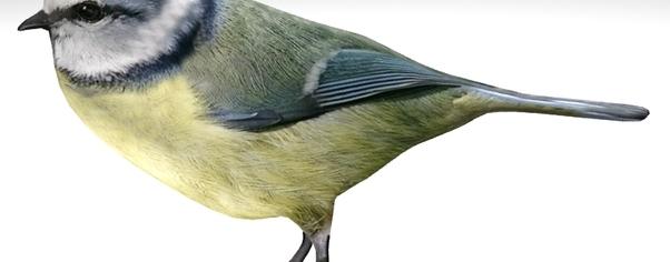 Nightingale3 wide