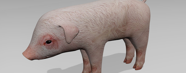 Pig r1 wide