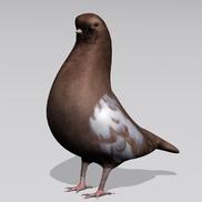 Pigeon3 small