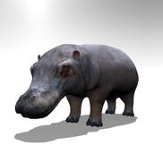 Hippo r1 small