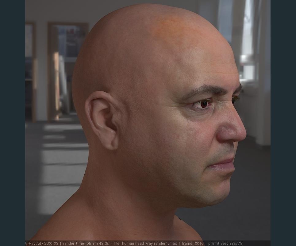 3d model realistic male human head 13 show