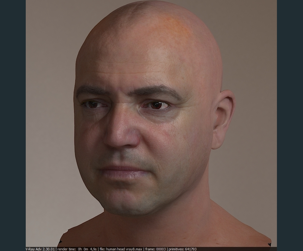 3d model realistic male human head  show