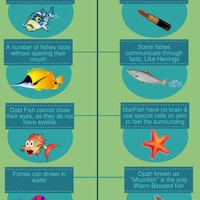 Fish facts infographic copy  cover