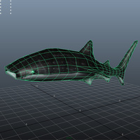 Whaleshark screenshot cover