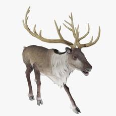 Reindeer Animated 3D Model