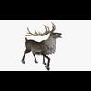 13 18 47 78 reindeerblendpic298 4