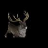 13 18 47 936 reindeerblackpic1 4