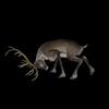 13 18 50 516 reindeerblackpic5 4