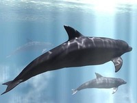 animating dolphin with animation deformers-*VIDEO*