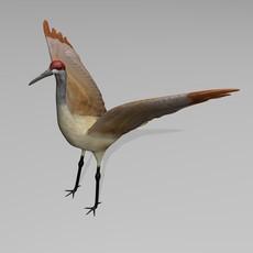 Sandhill Crane 3D Model