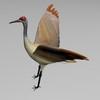 03 51 13 141 sandhill crane r2 4