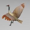 03 51 18 977 sandhill crane r3 4