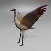 03 51 21 920 sandhill crane r5 4