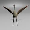 03 51 22 827 sandhill crane r6 4
