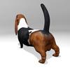 03 52 00 510 basset hound r3 4