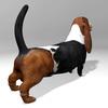 03 52 02 384 basset hound r4 4