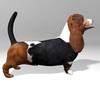 03 52 03 296 basset hound r5 4