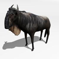 Antelope Gnu 3D Model
