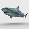 05 06 46 529 shark c 4