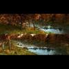 05 23 43 331 autumn leaves mangrove creeks animated scenes 3 4