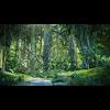 05 25 18 890 forest sence 3 1 4