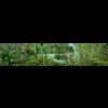 05 25 25 962 rainforest through the long lens 2 4