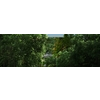 05 25 34 668 forest sence 4 1 4
