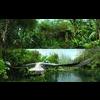 05 25 49 843 rainforest through the long lens 1 4